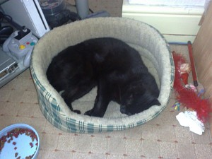 RIP, Black Cat.