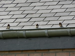 Roof with three swallows